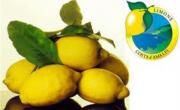 Limoni di Amalfi IGP